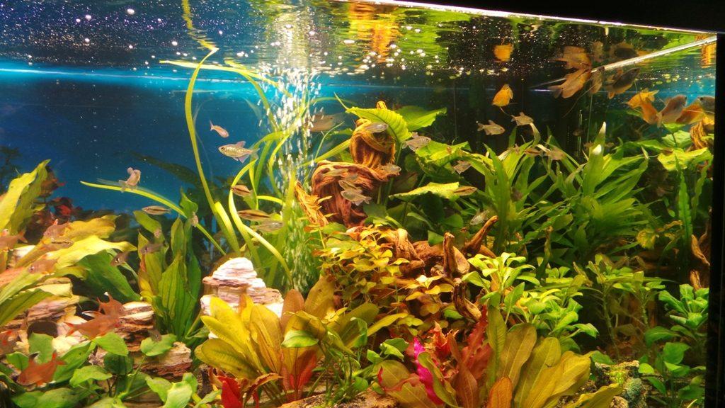 Smilingpets nano stern 5 keramik sterne als deko f r das nano aquarium mit garnelen bunte - Nano aquarium deko ...